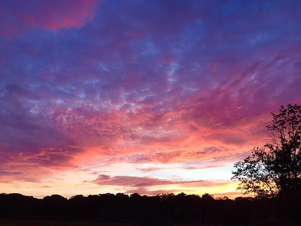 sunsetmarshblog