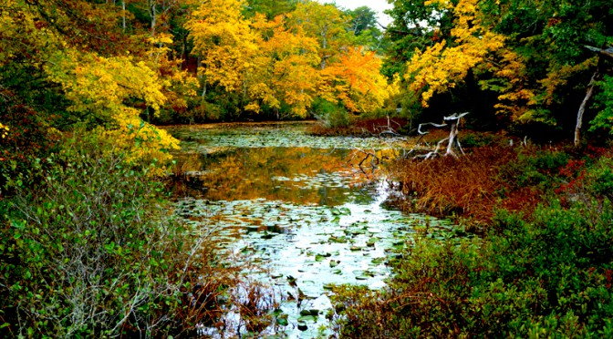 Gorgeous Fall Day On The Trails At Wellfleet Bay Wildlife Sanctuary On Cape Cod