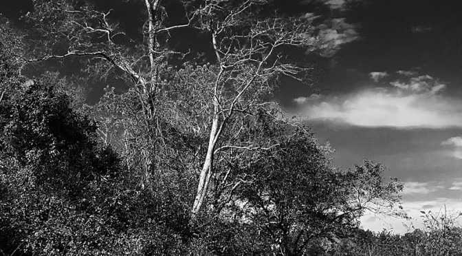 Stunning Black And White Photograph At Fort Hill In Eastham On Cape Cod