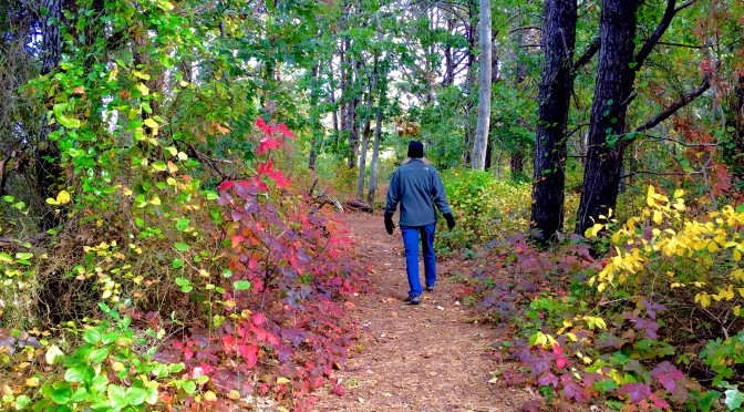 It Was A Crisp Fall Day For a Hike At Wiley Park In Eastham On Cape Cod