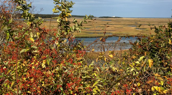Autumn Views Of Nauset Marsh From Fort Hill In Eastham On Cape Cod