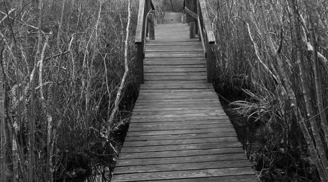 Black And White Photograph Of The Bridge At The Audubon Sanctuary In Wellfleet On Cape Cod