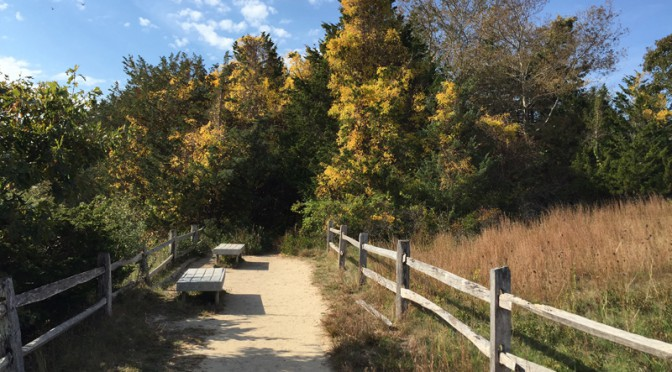 Sit On A Bench And Relax On The Nauset Marsh Trail In Eastham On Cape Cod