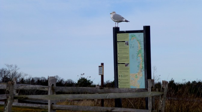 Welcome To Fort Hill And Nauset Marsh On Cape Cod