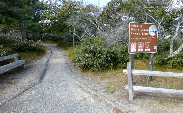 Atlantic White Cedar Swamp Trail In Wellfleet On Cape Cod