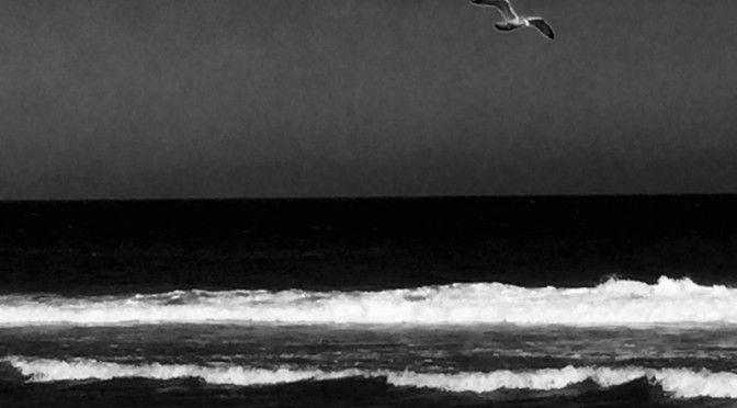 Black And White Photograph Of A Seagull Over Nauset Beach On Cape Cod