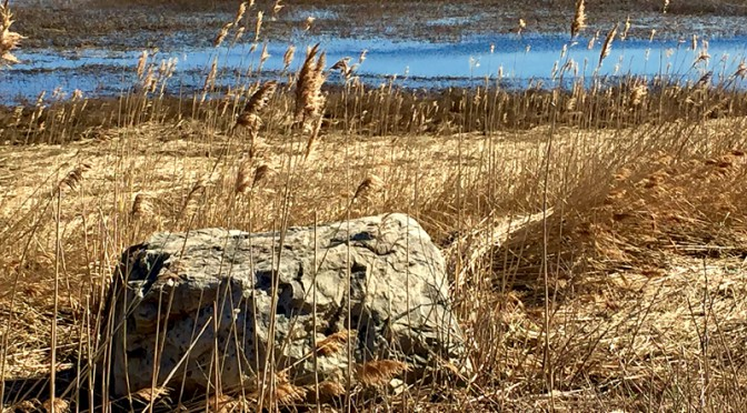 Glacial Rock By Nauset Marsh At Fort Hill On Cape Cod
