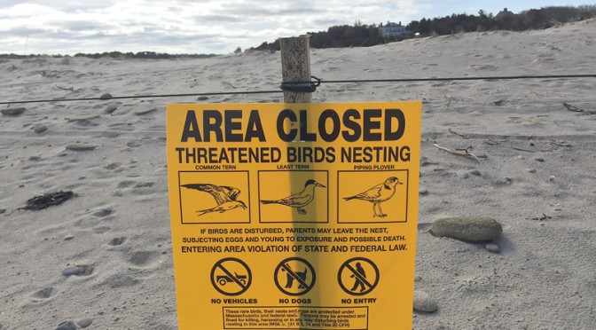 Beware Of The Birds Nesting Along The National Seashore On Cape Cod