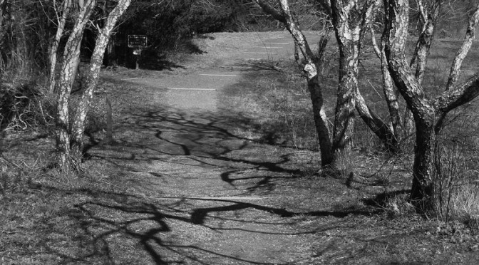 Black And White Photograph Of A Hiking Trail At Fort Hill On Cape Cod