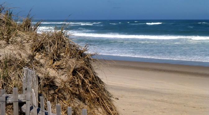 Nauset Beach Dunes On Cape Cod