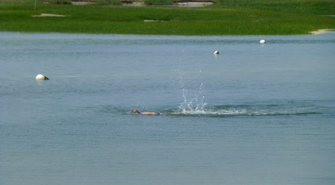 Swimming At Boat Meadow In Eastham on Cape Cod Yesterday!