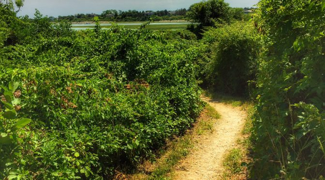 Wonderful Hiking Trails At Fort Hill On The National Seashore On Cape Cod