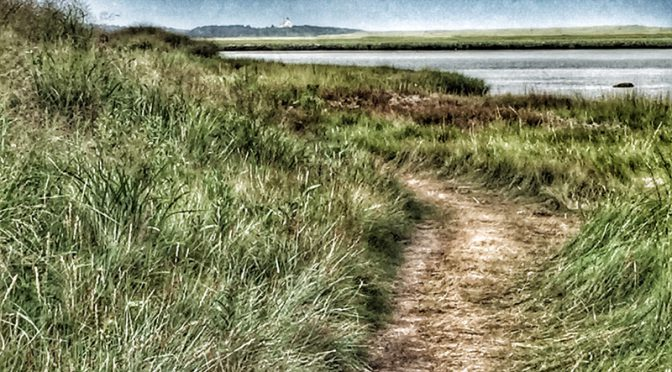 Marsh Trail At Fort Hill In Eastham On Cape Cod