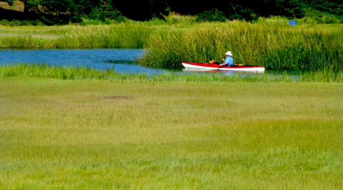 Kayaking On The Creeks Of Cape Cod