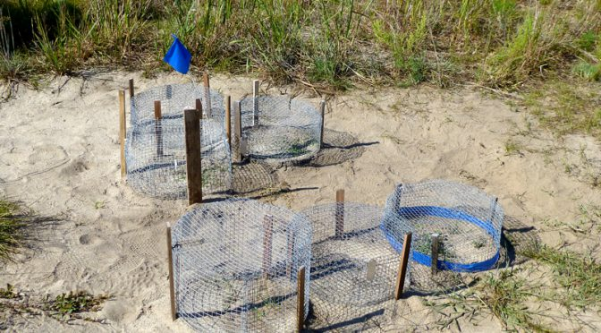 Terrapin Turtle Cages At The Mass Audubon Wildlife Sanctuary On Cape Cod