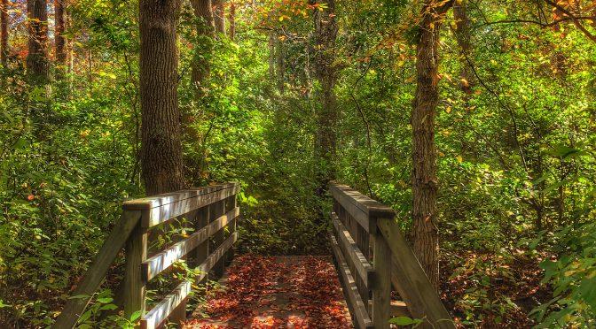 Fall Hike in Eastham On Cape Cod
