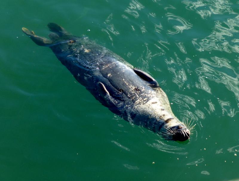 sealback