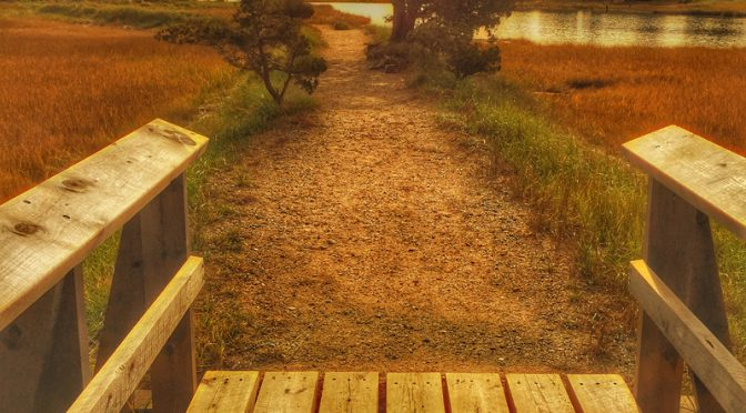 Salt Pond Trail In Eastham On Cape Cod Is A Wonderful Hike For The Whole Family
