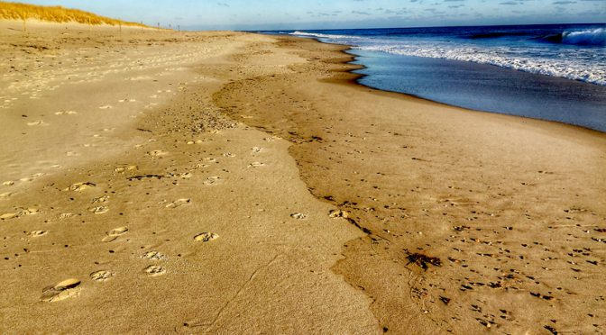 Walking In Solitude On Nauset Beach Orleans Cape Cod Blog