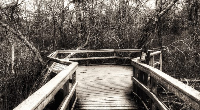 Black And White Photograph Of The Boardwalk At Fort Hill On Cape Cod