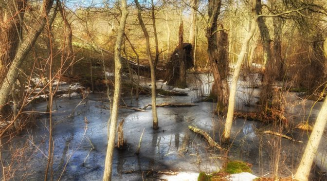 Red Maple Swamp Trail At Fort Hill On Cape Cod