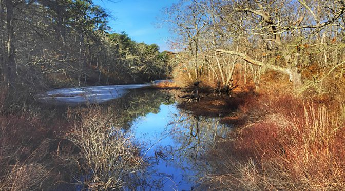 Silver Spring Loop Trail At The Wellfleet Bay Wildlife Sanctuary On Cape Cod