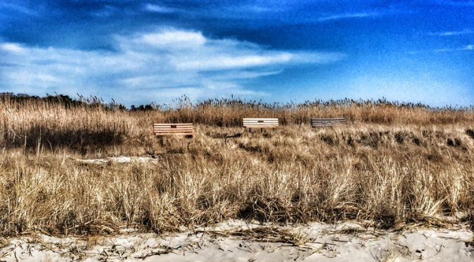 Another Perfect Picnic Spot On Cape Cod Bay