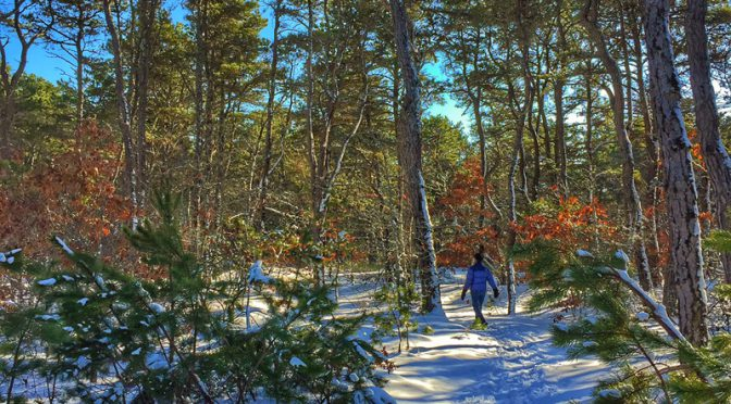 Hiking Wiley Park On Cape Cod After The Blizzard