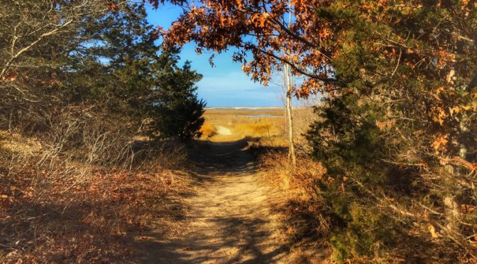 Great Trail At The Wellfleet Bay Wildlife Sanctuary On Cape Cod