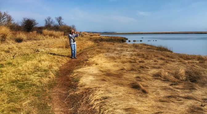 Perfect Day To Hike Nauset Marsh On Cape Cod