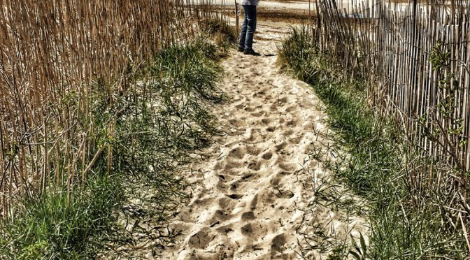 Beautiful Trail To Cape Cod Bay In Eastham