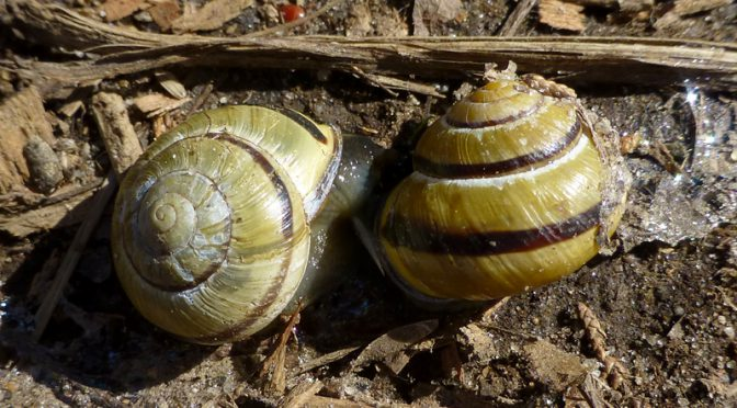 Interesting Snail Shells On The trails At Fort Hill On Cape Cod