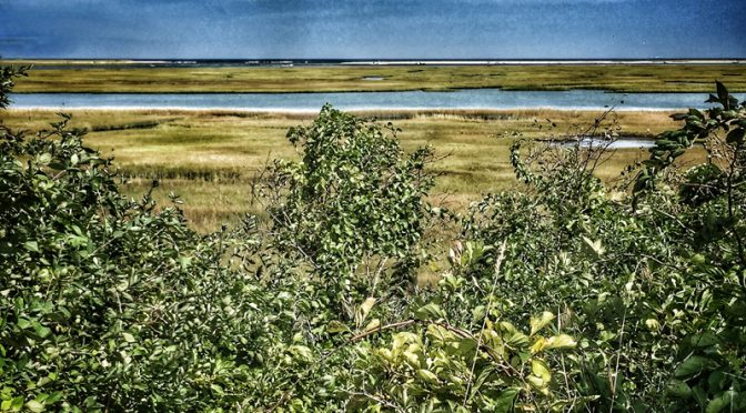 Nauset Marsh on The National Seashore On Cape Cod