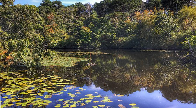Fall Reflection At The Wellfleet Bay Wildlife Sanctuary