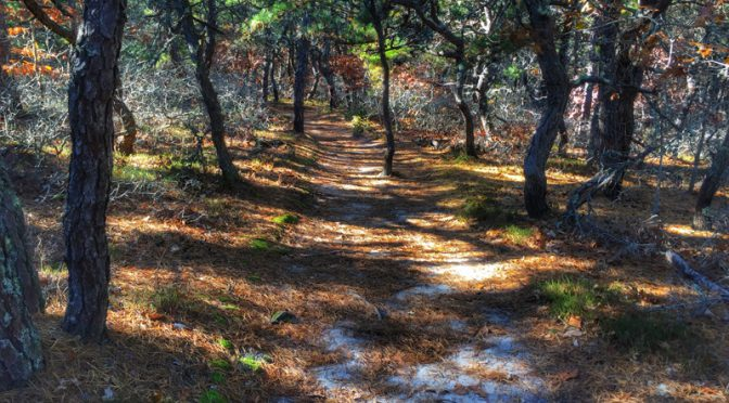 Beautiful Hike At The Atlantic White Cedar Swamp Trail In Wellfleet On Cape Cod