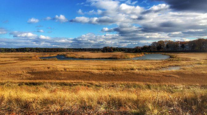 Boat Meadow Salt Marsh On Cape Cod In The Fall