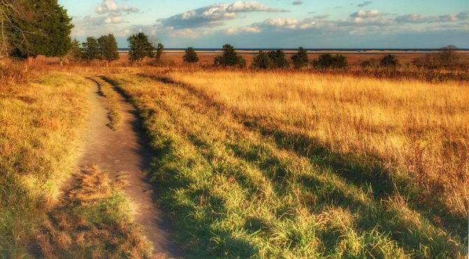 Fort Hill Is A Perfect Place To Hike On Cape Cod… Anytime!