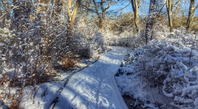 Snowy Red Maple Swamp Trail At Fort Hill On Cape Cod