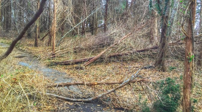 The Trees At Fort Hill On Cape Cod Got Hammered!