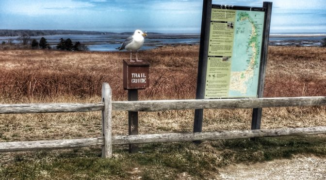 Perfect Trail Guide At Fort Hill, Part Of The National Seashore, On Cape Cod
