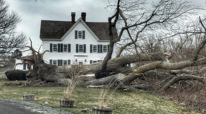 Iconic Tree At Fort Hill On Cape Cod is Down From The Huge Storm This Weekend!
