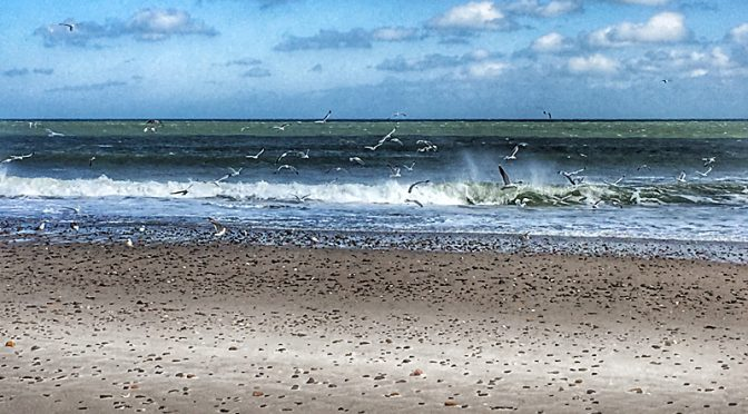 Feeding Frenzy At Nauset Beach On Cape Cod