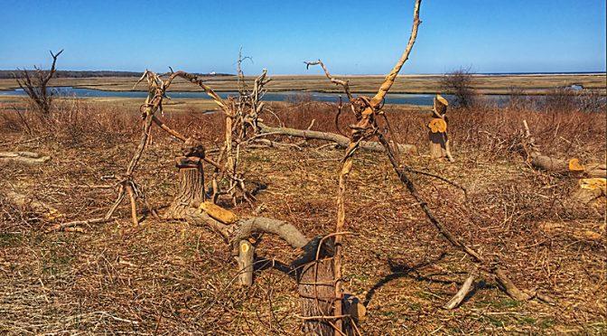 Fort Hill Tree Art On Cape Cod