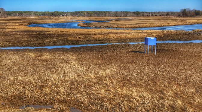 The Blue Boxes Are Back On The Salt Marshes On Cape Cod