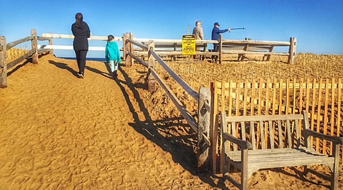 New Viewing Platform At Nauset Beach On Cape Cod