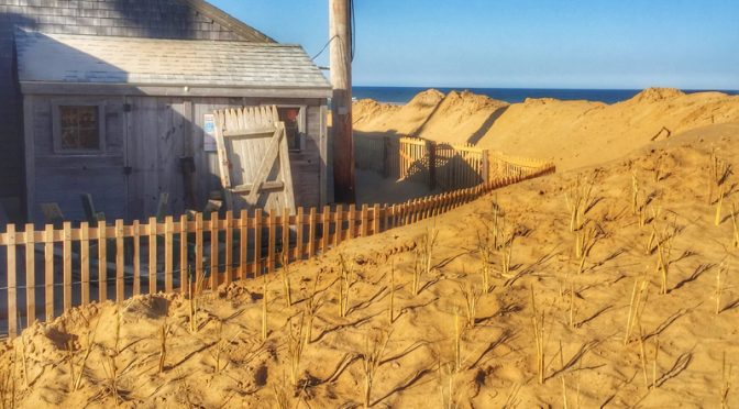 New Sand At Nauset Beach Dunes On Cape Cod