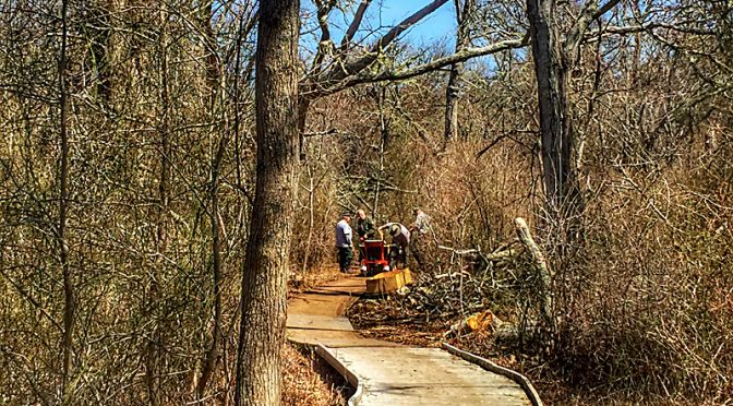 Repairing The Boardwalk On Red Maple Swamp Trail At Fort Hill On Cape Cod