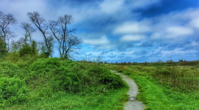 Fort Hill In Eastham On Cape Cod Is Lush