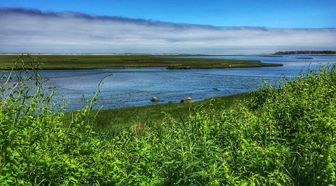 Beautiful View Of Nauset Marsh On Cape Cod