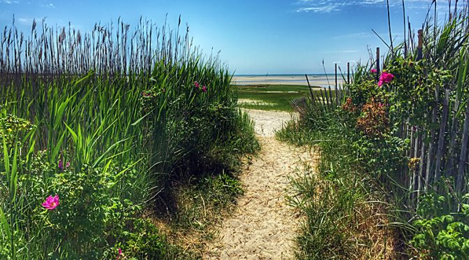 Gorgeous Beach Path To Cape Cod Bay